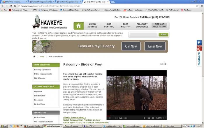 hawkeye2.png