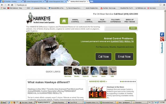 hawkeye1.png
